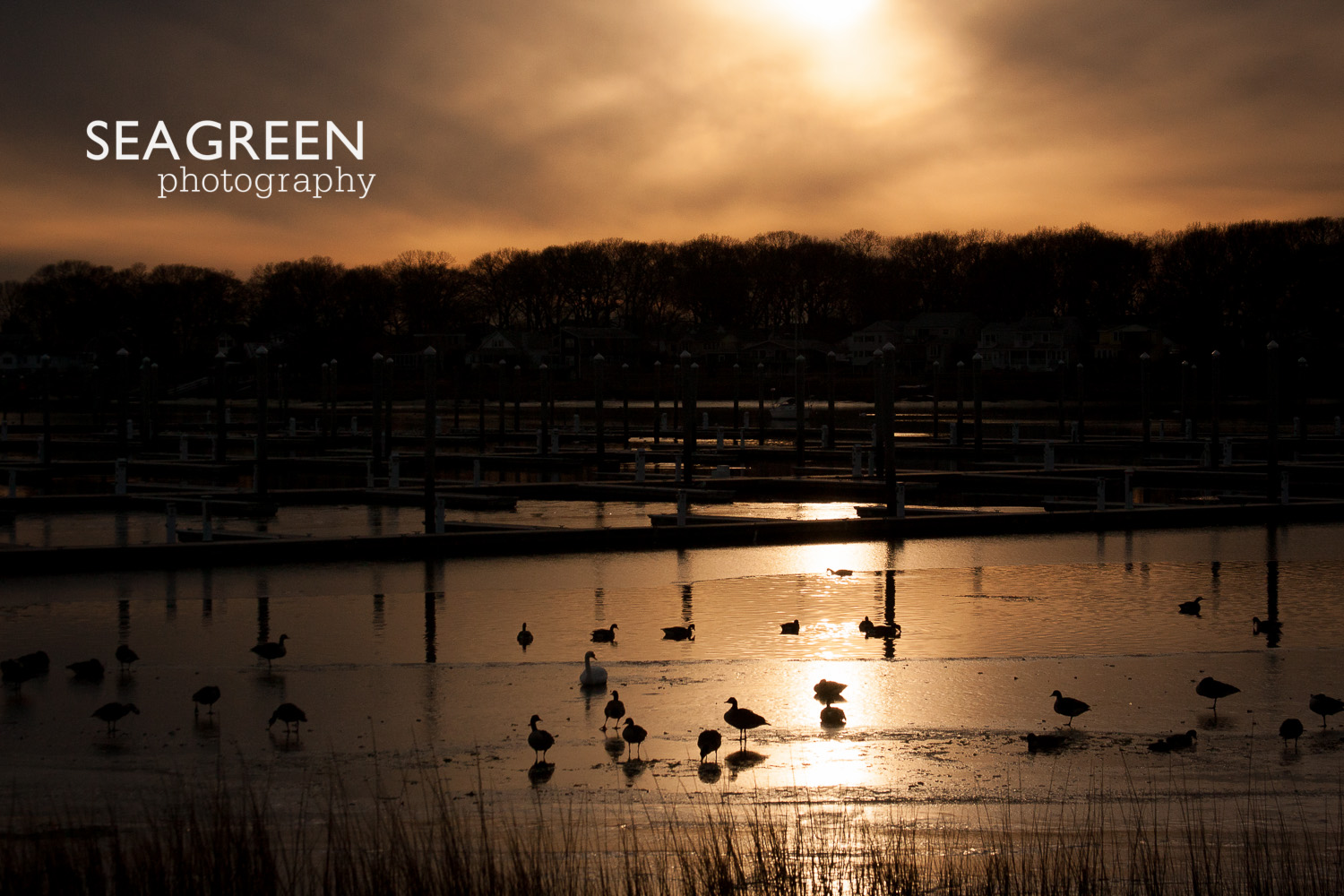 sunset geese sea green photo