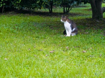 Garden cat in Tokyo