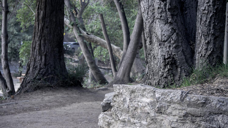 treesdesaturate.jpg