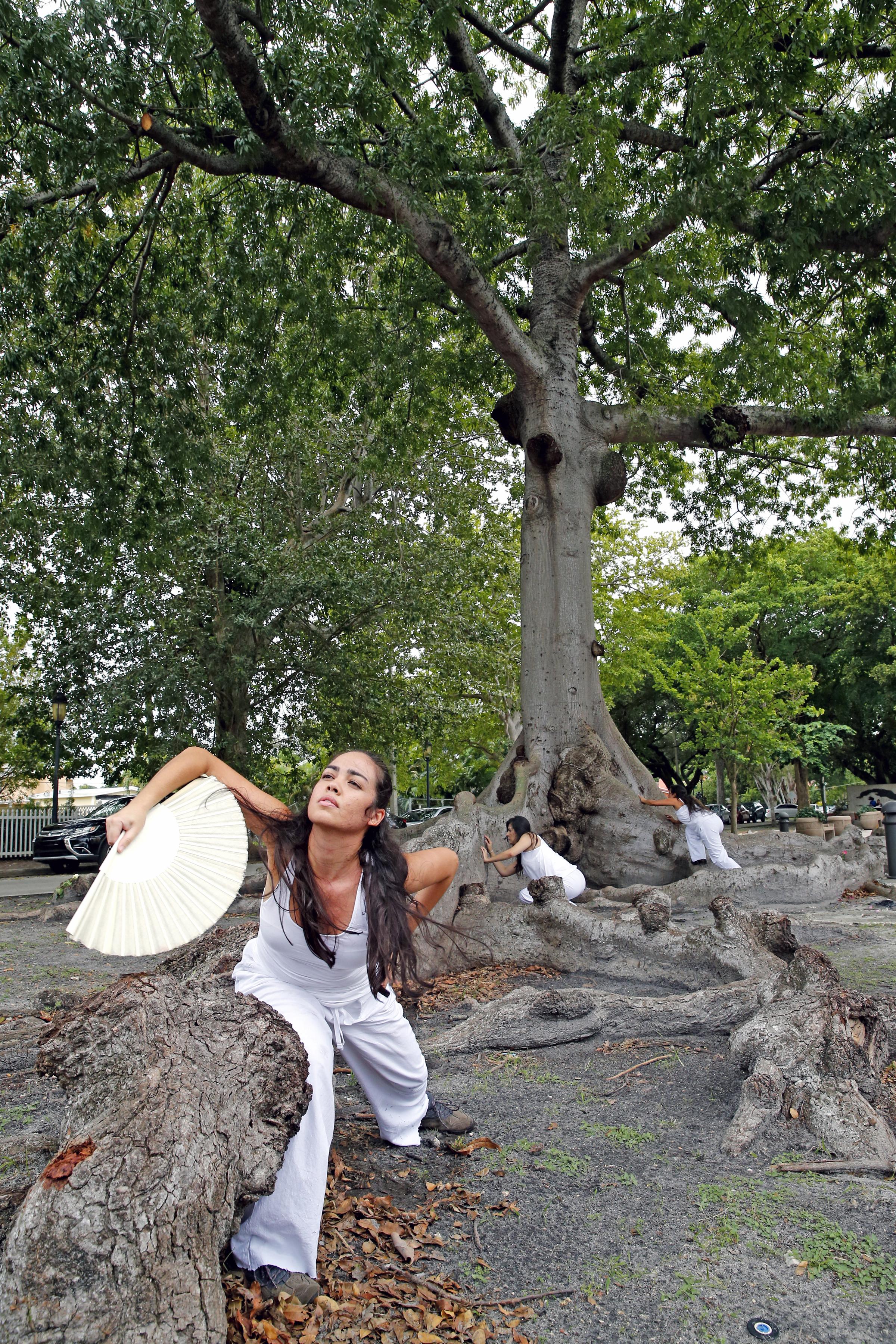 KNIGHT TREE 11.jpg