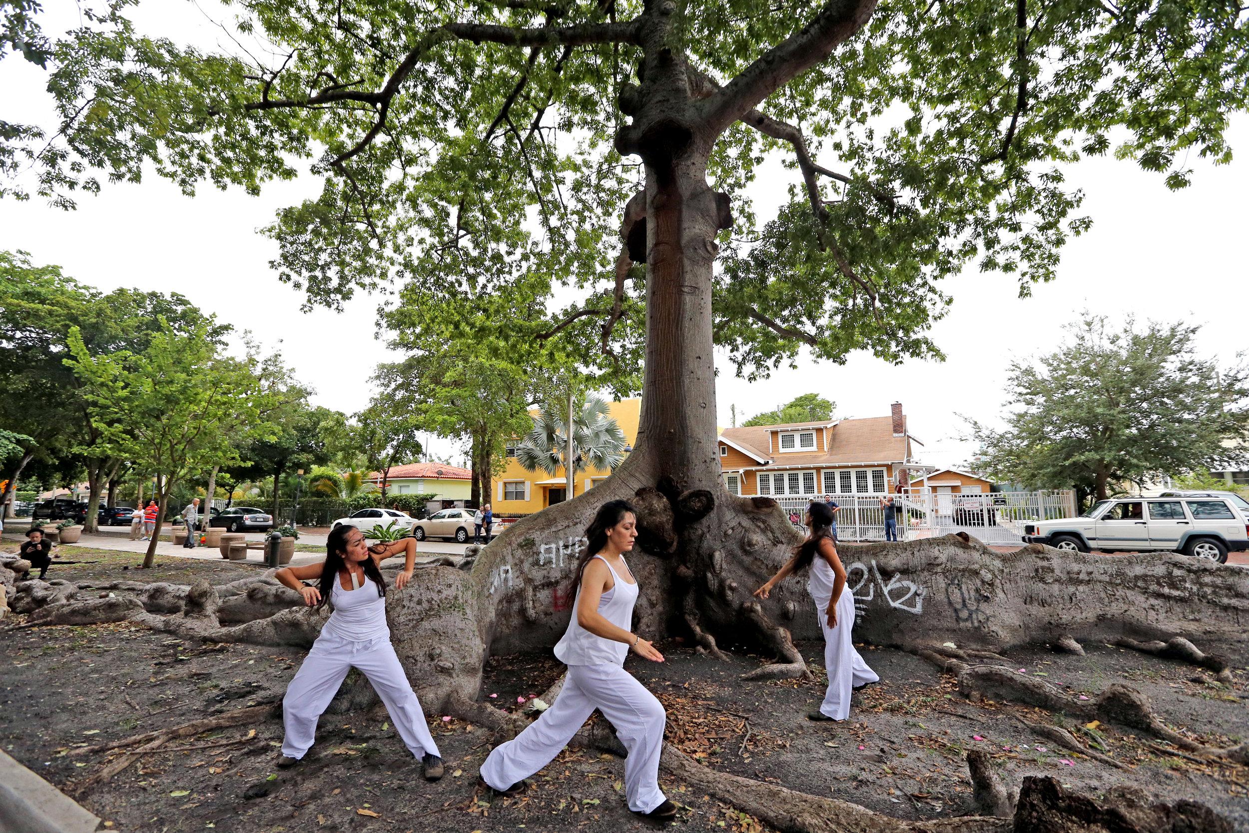 KNIGHT TREE 20.jpg