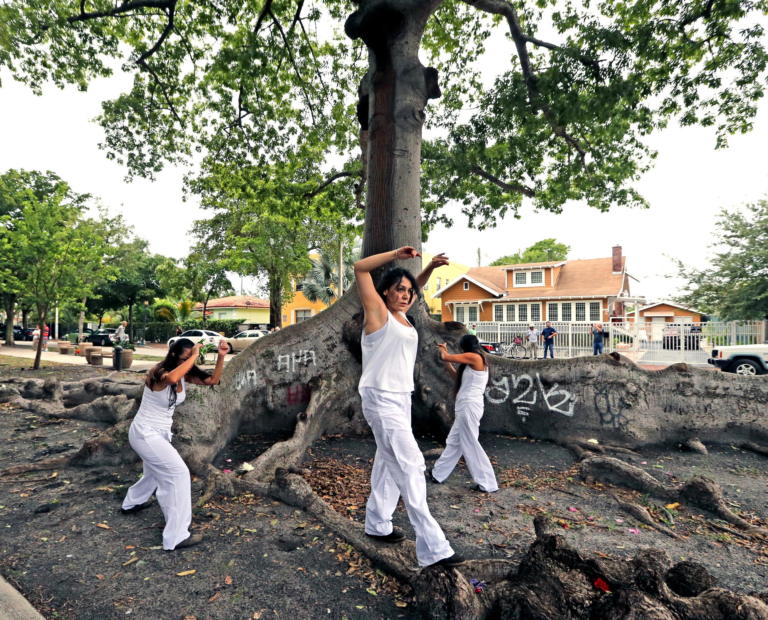 KNIGHT TREE 23.jpg