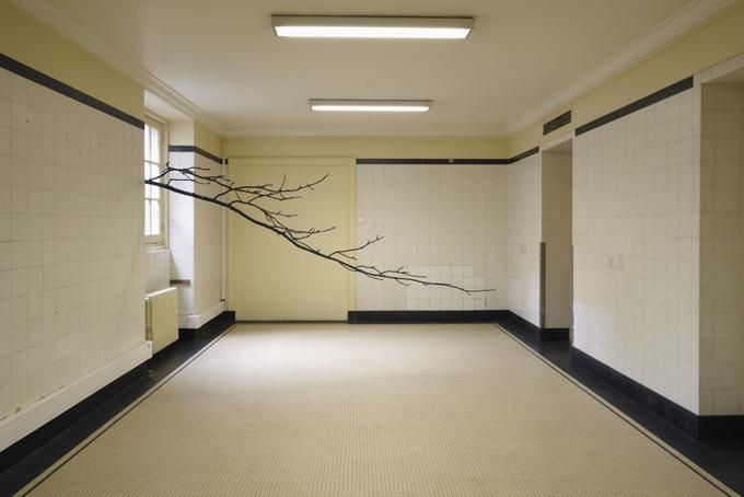 """Paula Anta, """" L'architecture des arbres (ARBRE01) """",2013. Impresión en papel fotográfico (RC), 117x162cm."""
