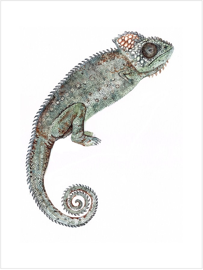 LSG_Reptiles_Micromelia.jpg