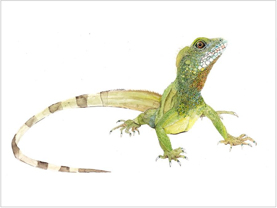 LSG_Reptiles_Polidactilia.jpg