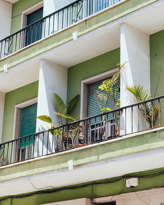 Palm in your window - - - #vscoaesthetics #rentalmagazine #travelerinportugal #somewheretravel #somewheremag #palmtreelife #vscofilm