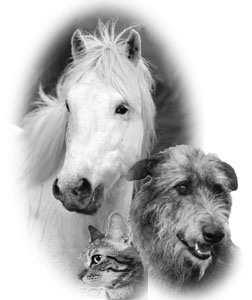 CAT-DOG-AND-HORSE.jpg