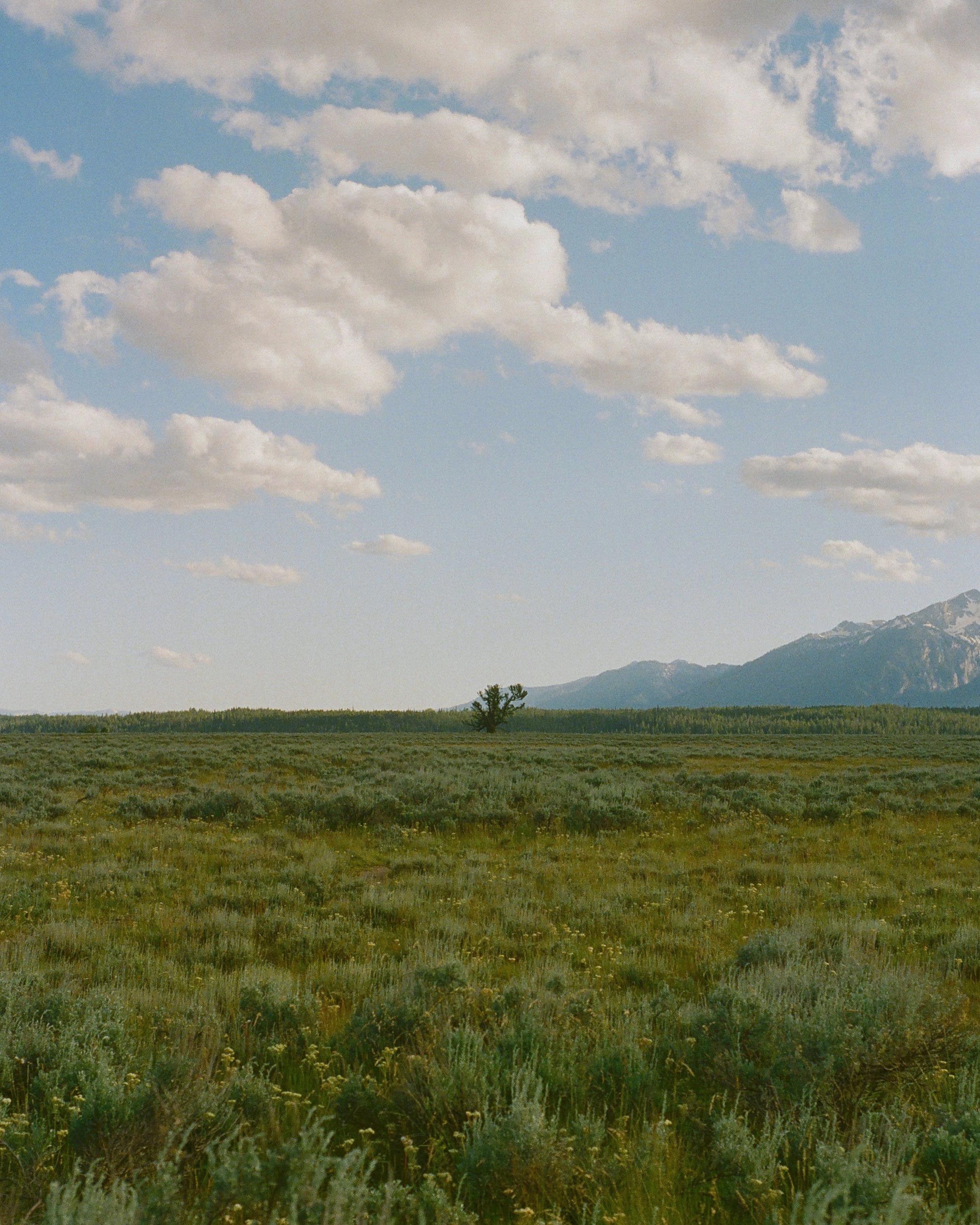 一家四口所看見的風景