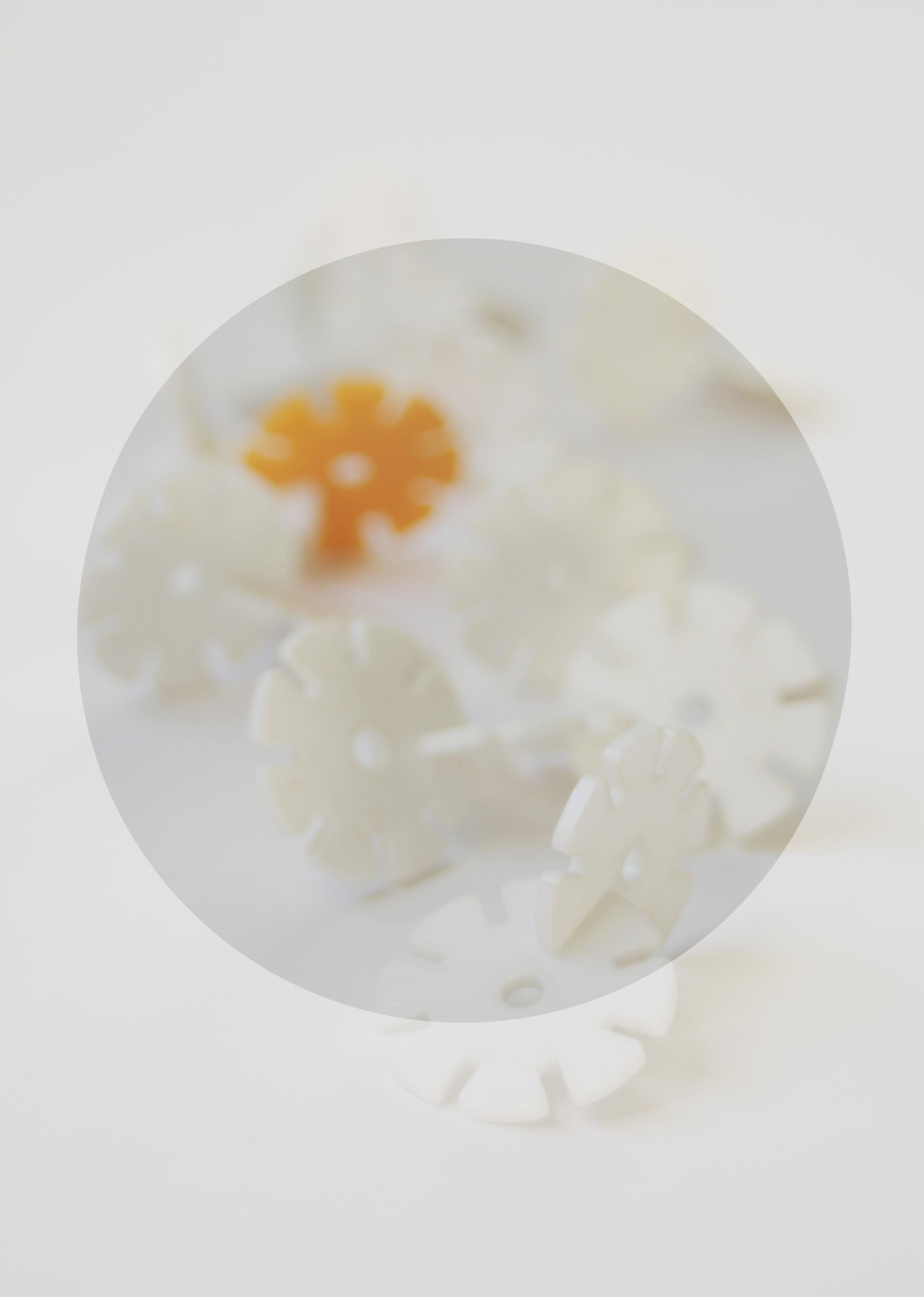 daisiesfinalwebsite2.jpg