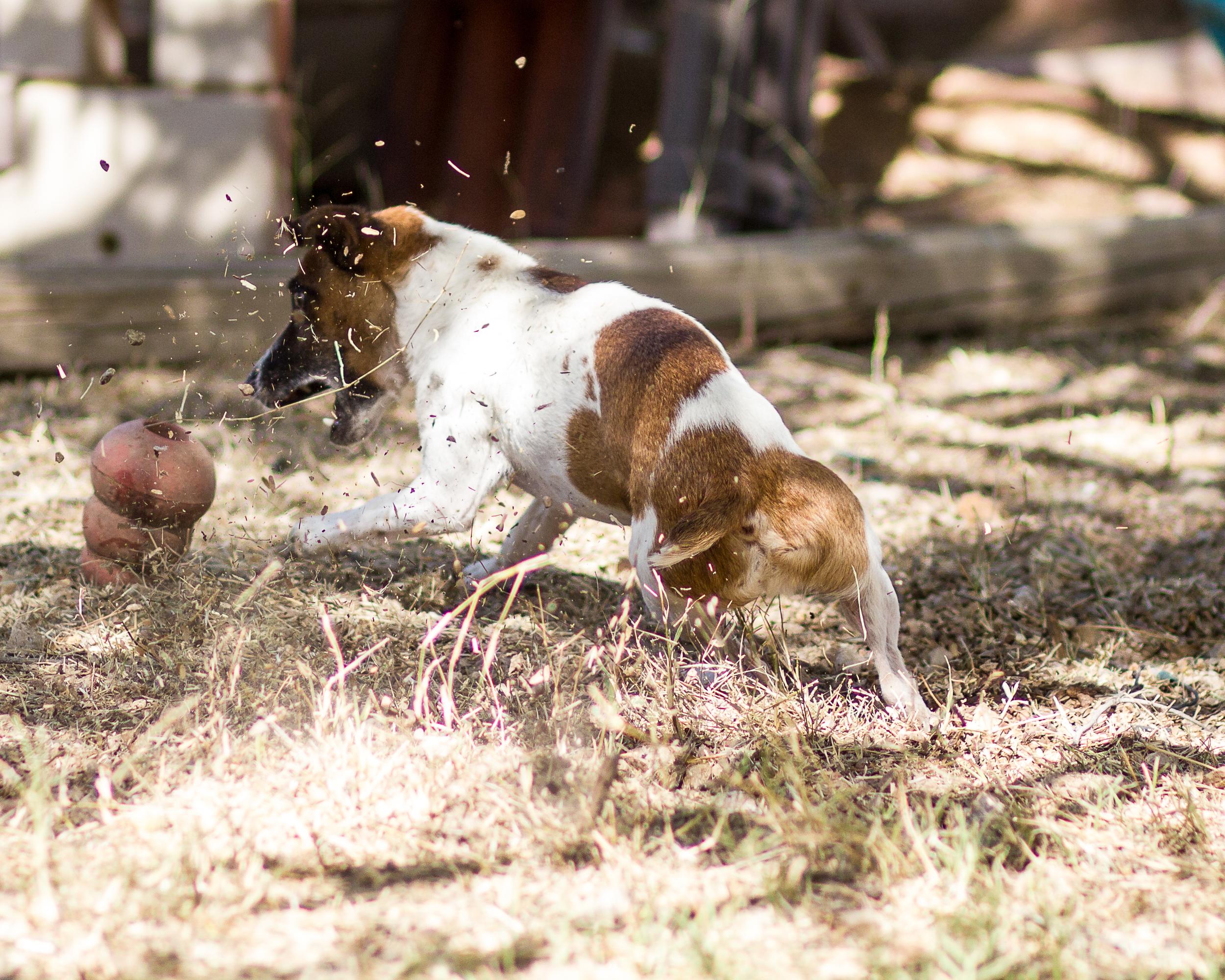 Dog Training in Tucson, AZ
