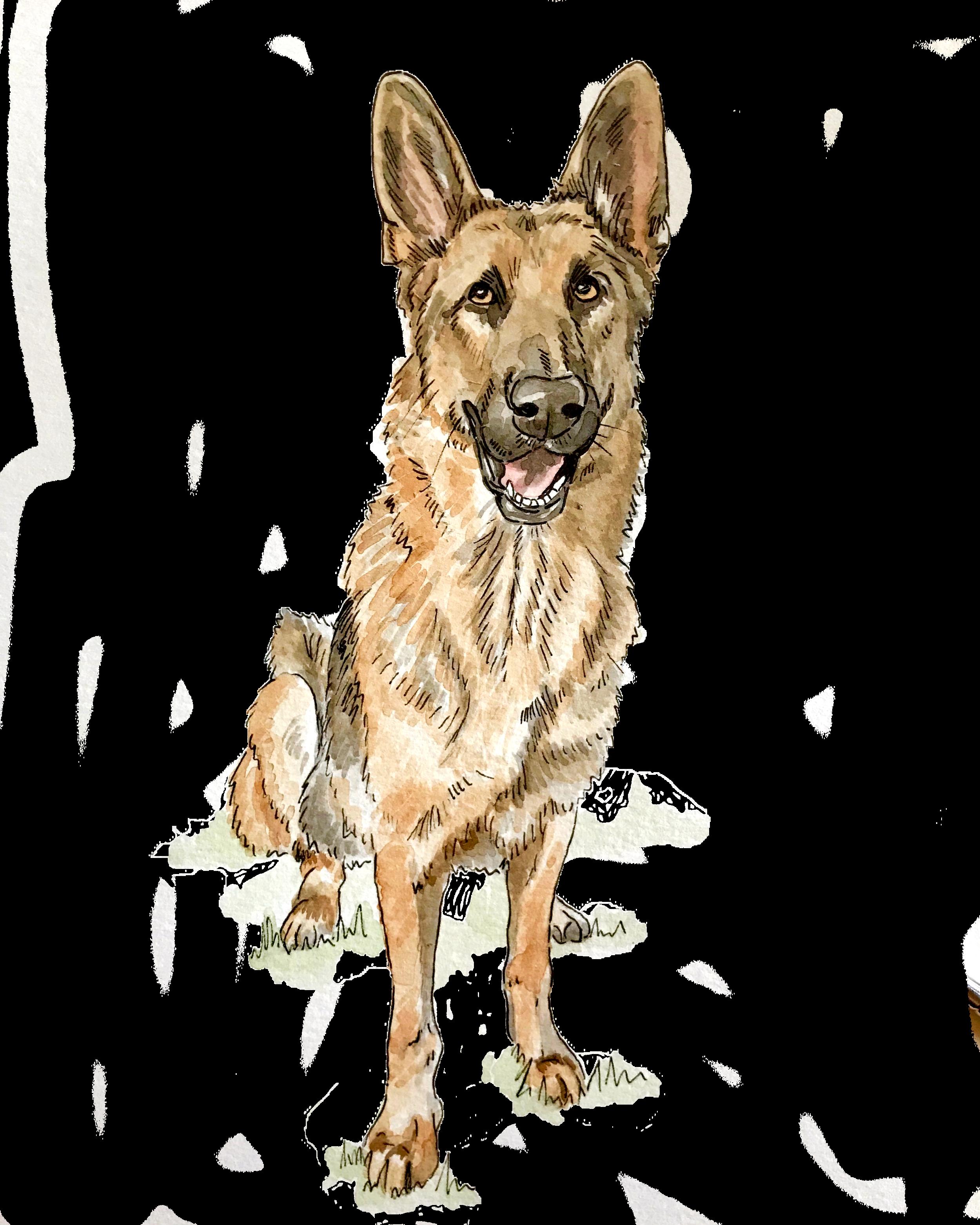 dog watercolor #3.png