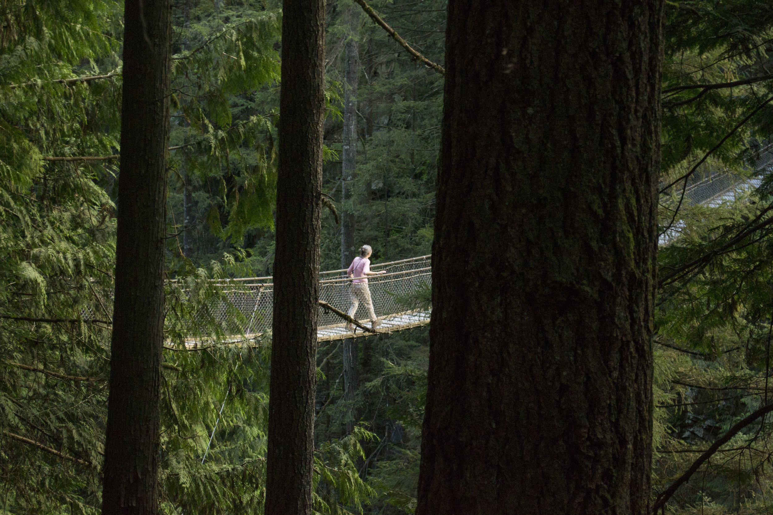Adventure tours of Vancouver with Lynn Canyon.