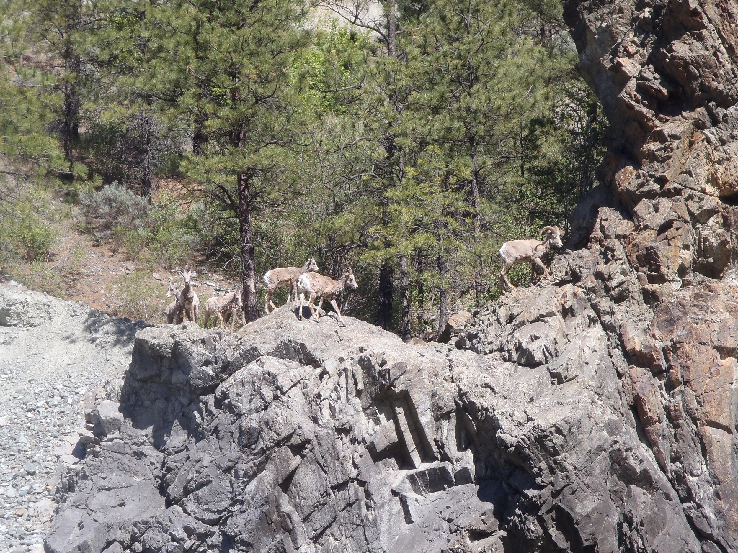 Wildlife tour in Banff