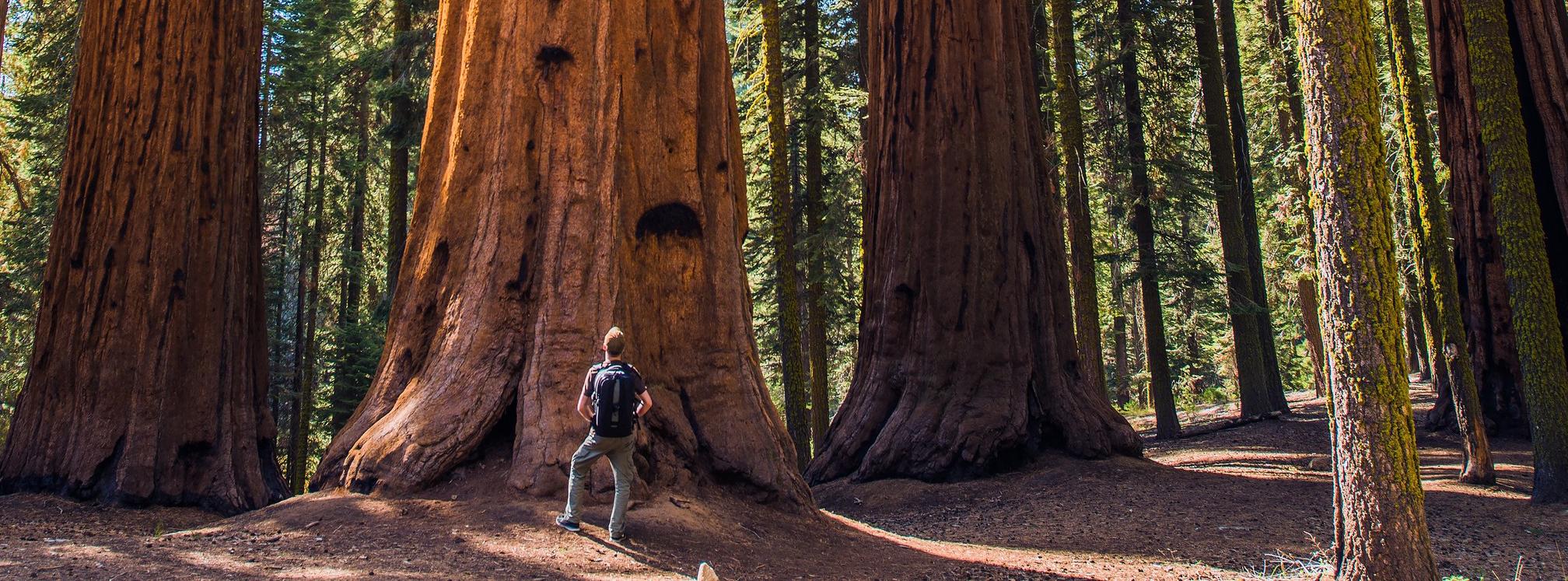 man vs tree cropped.jpg