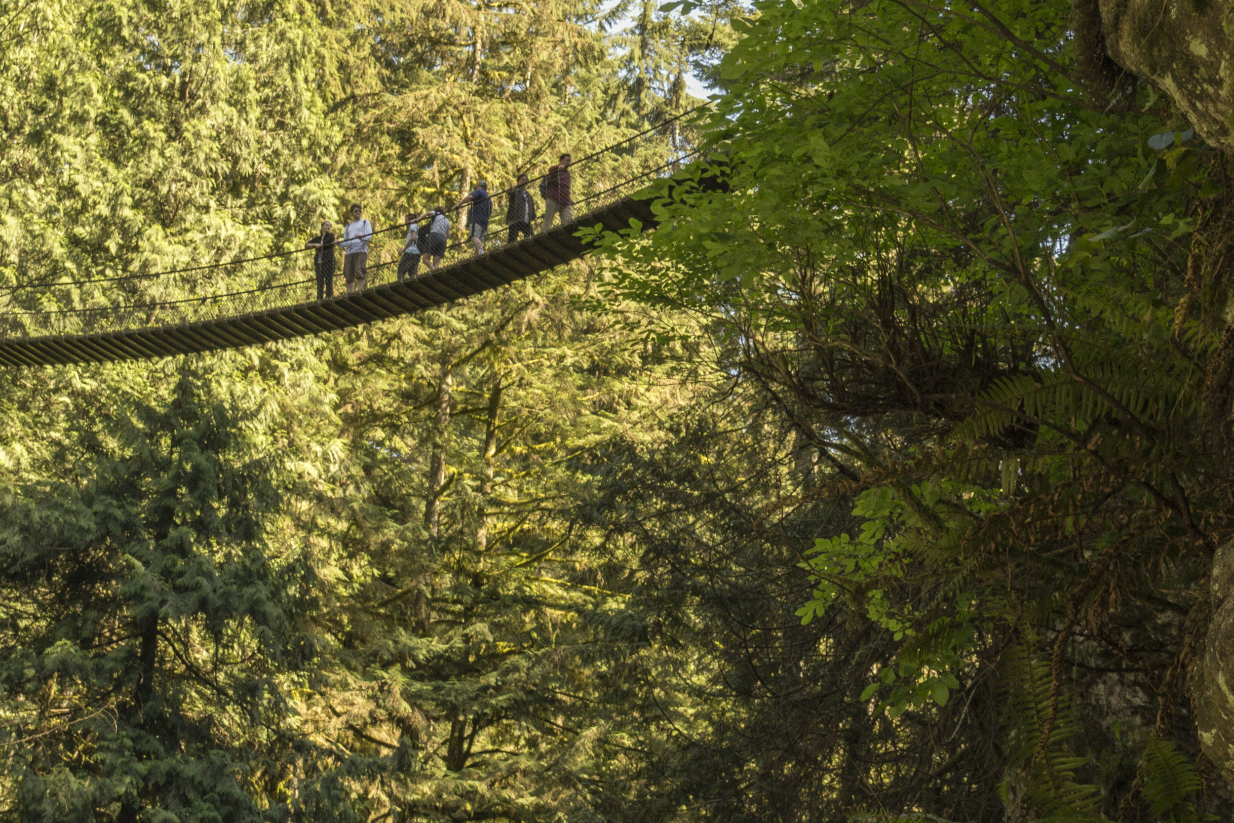 Guided cycling tour in Vancouver with suspension bridge