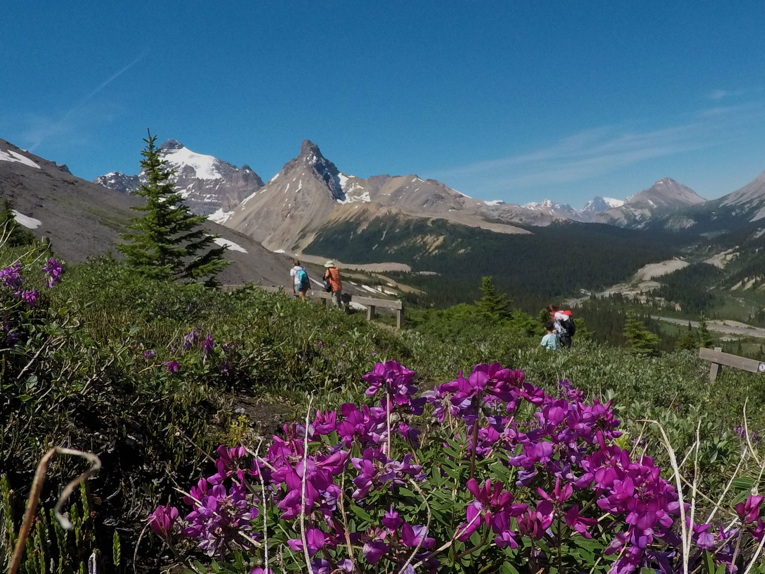 Hiking off the beaten path in the Rockies on a guided tour.
