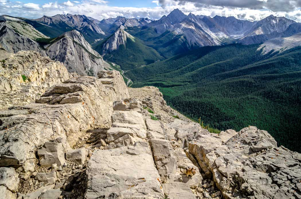 Guided hiking tour in the Canadian rocky mountains.
