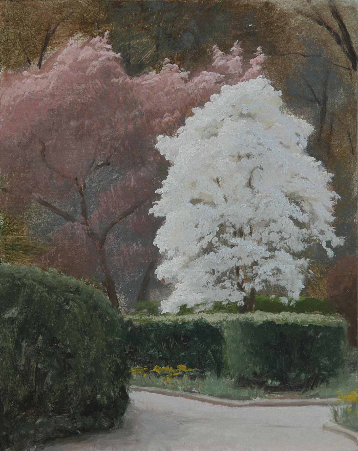 magnolias_in_bloom.jpg