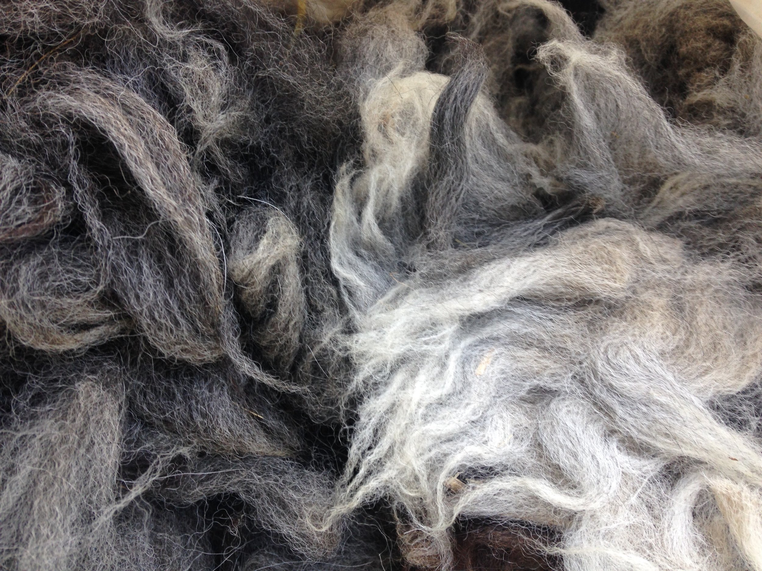 Alpaca fleece ready for processing at the Made Local House.