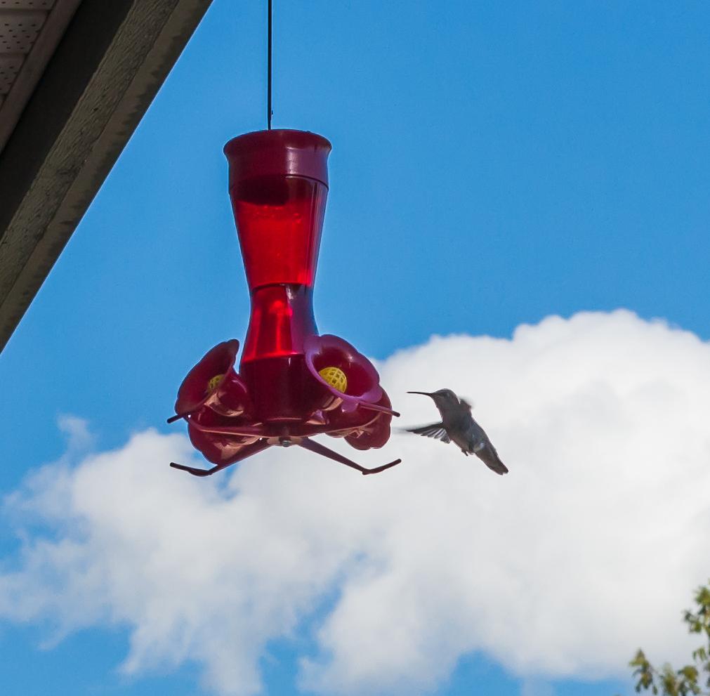 304 Hummingbird.jpg