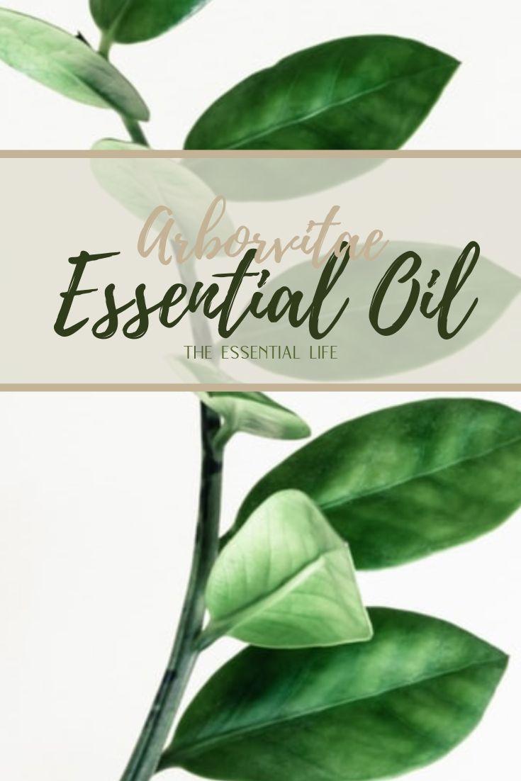Arborvitae Essential Oil_ The Essential Life.jpg
