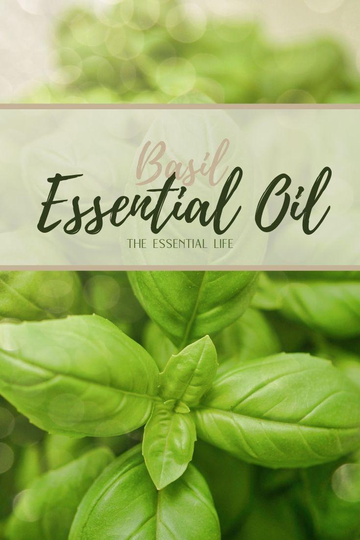 Basil Essential Oil_ The Essential Life.jpg