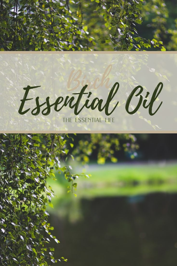 Birch Essential Oil_ The Essential Life.jpg