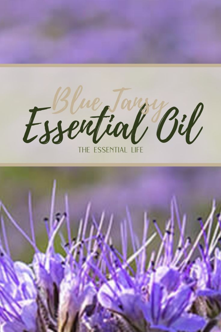 Blue Tansy Essential Oil_ The Essential Life.jpg