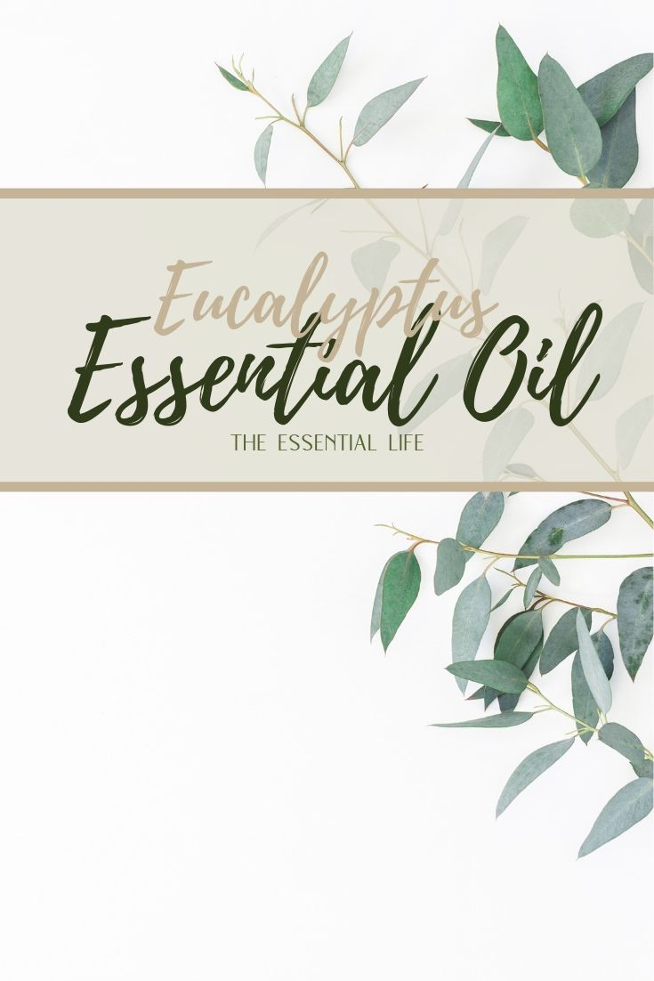 Eucalyptus Essential Oil_ The Essential Life.jpg
