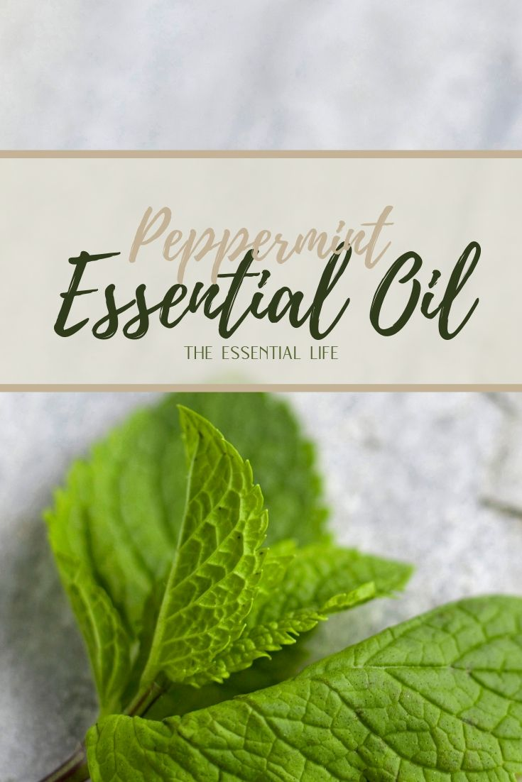 Peppermint Essential Oil_ The Essential Life.jpg