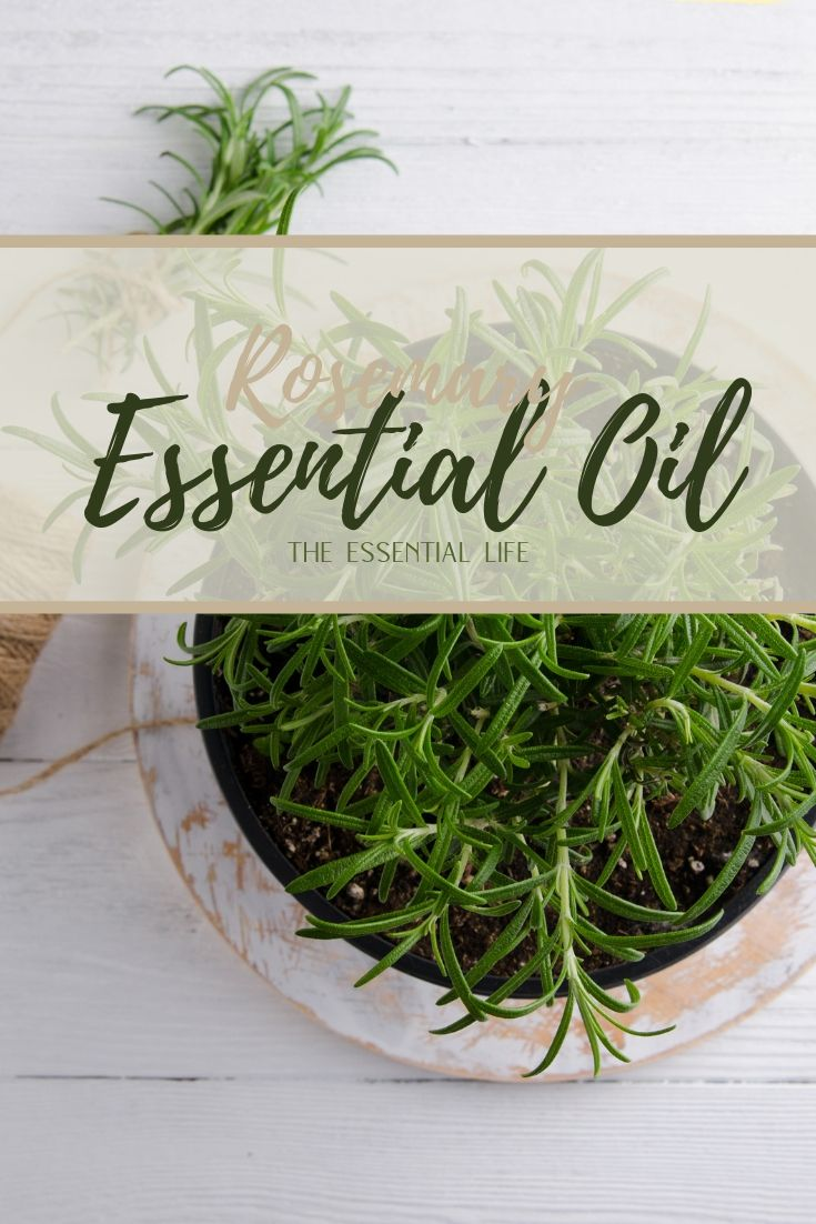 Rosemary Essential Oil_ The Essential Life.jpg