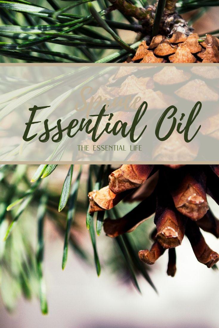 Spruce Essential Oil_ The Essential Life.jpg