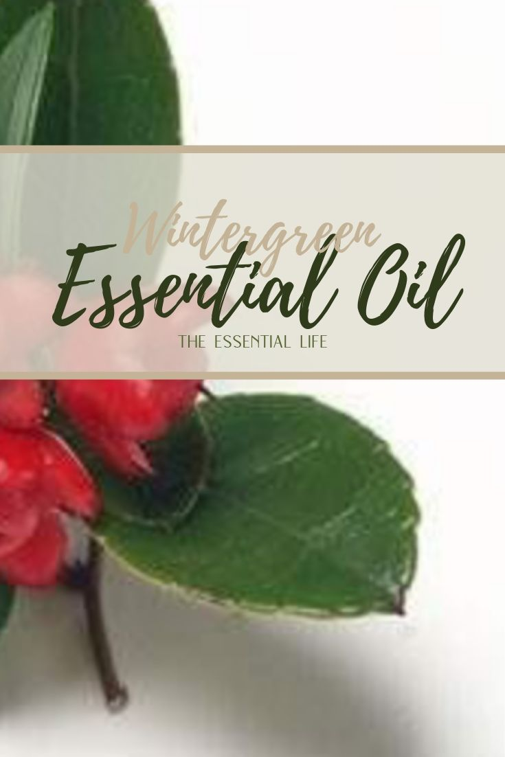 Wintergreen Essential Oil_ The Essential Life.jpg