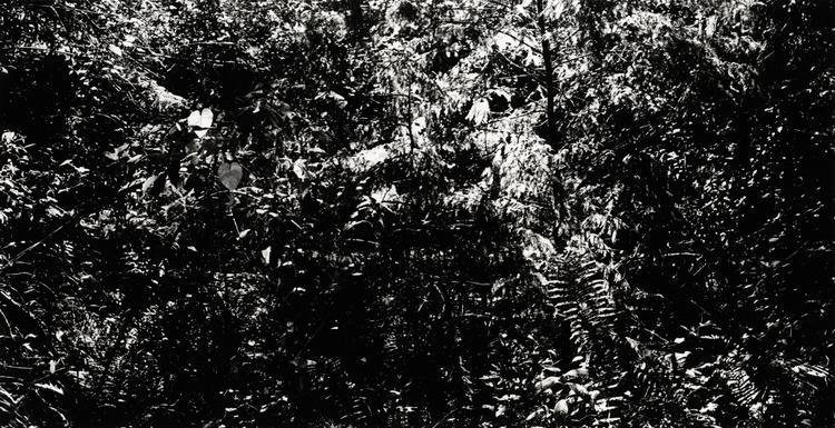 DISORIENTATION, 2014, GELATIN SILVER PRINT, 180 X 100 CM