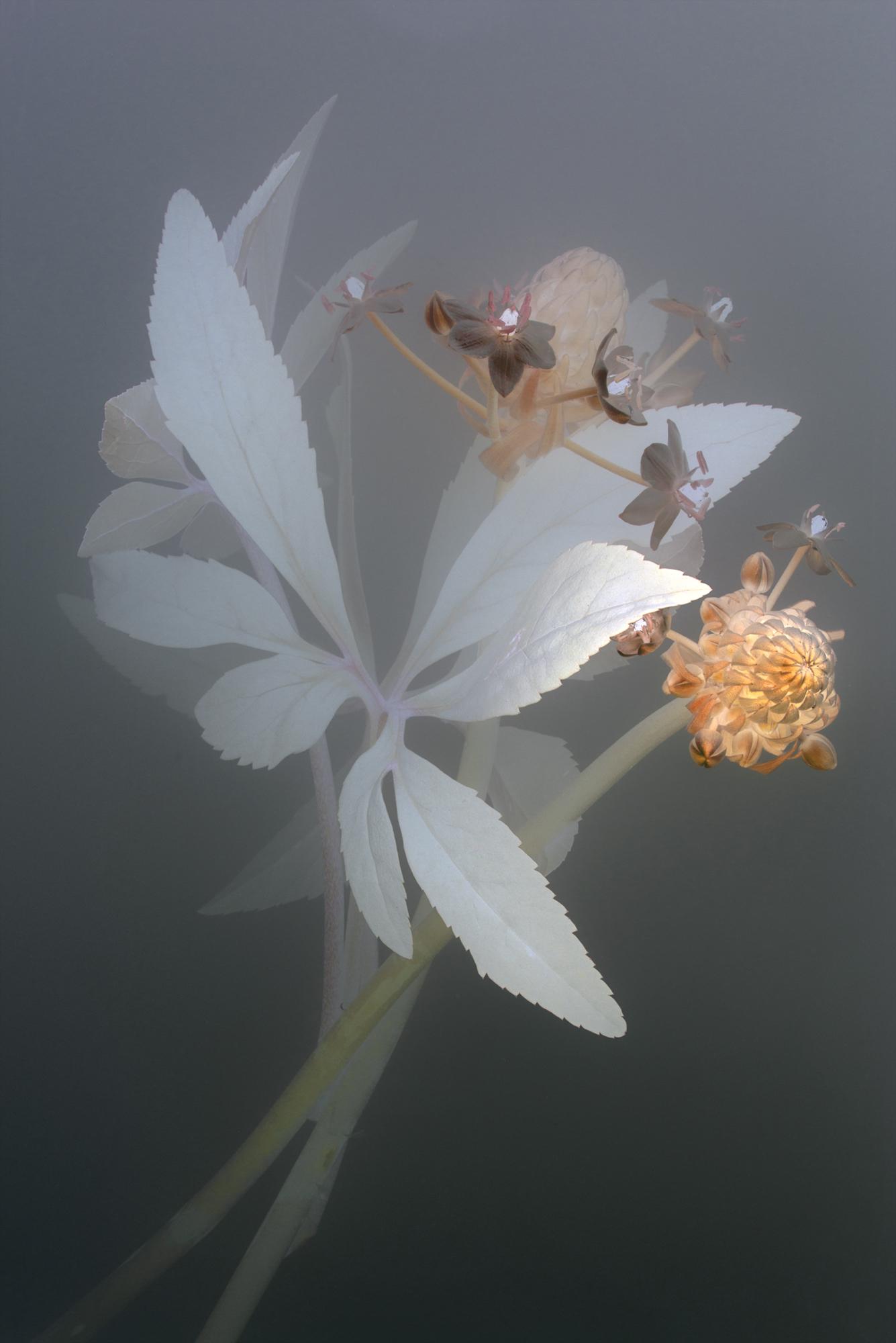 Florilegium   P80, 2018