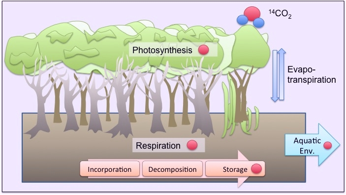 Following carbon dioxide through terrestrial to freshwater ecosystems.