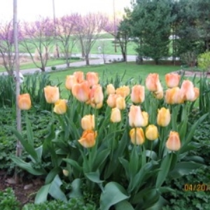The garden of Betty & Schroeder Dodds