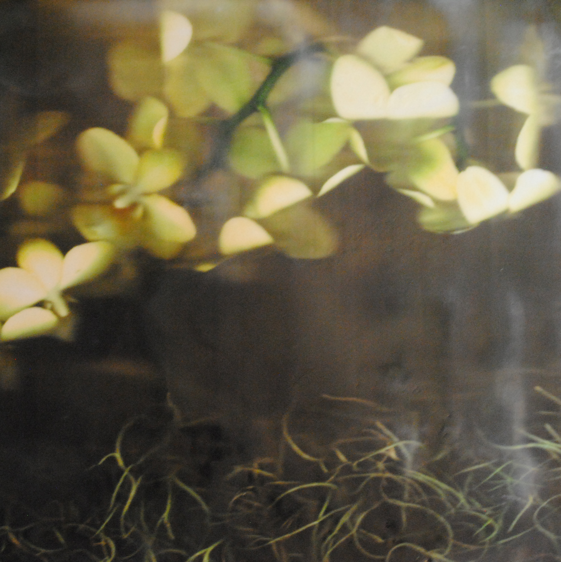 Yellow Orchids , 2018, handheld wand digital scan and print, mounted on panel, fused with wax. Image courtesy of the artist.