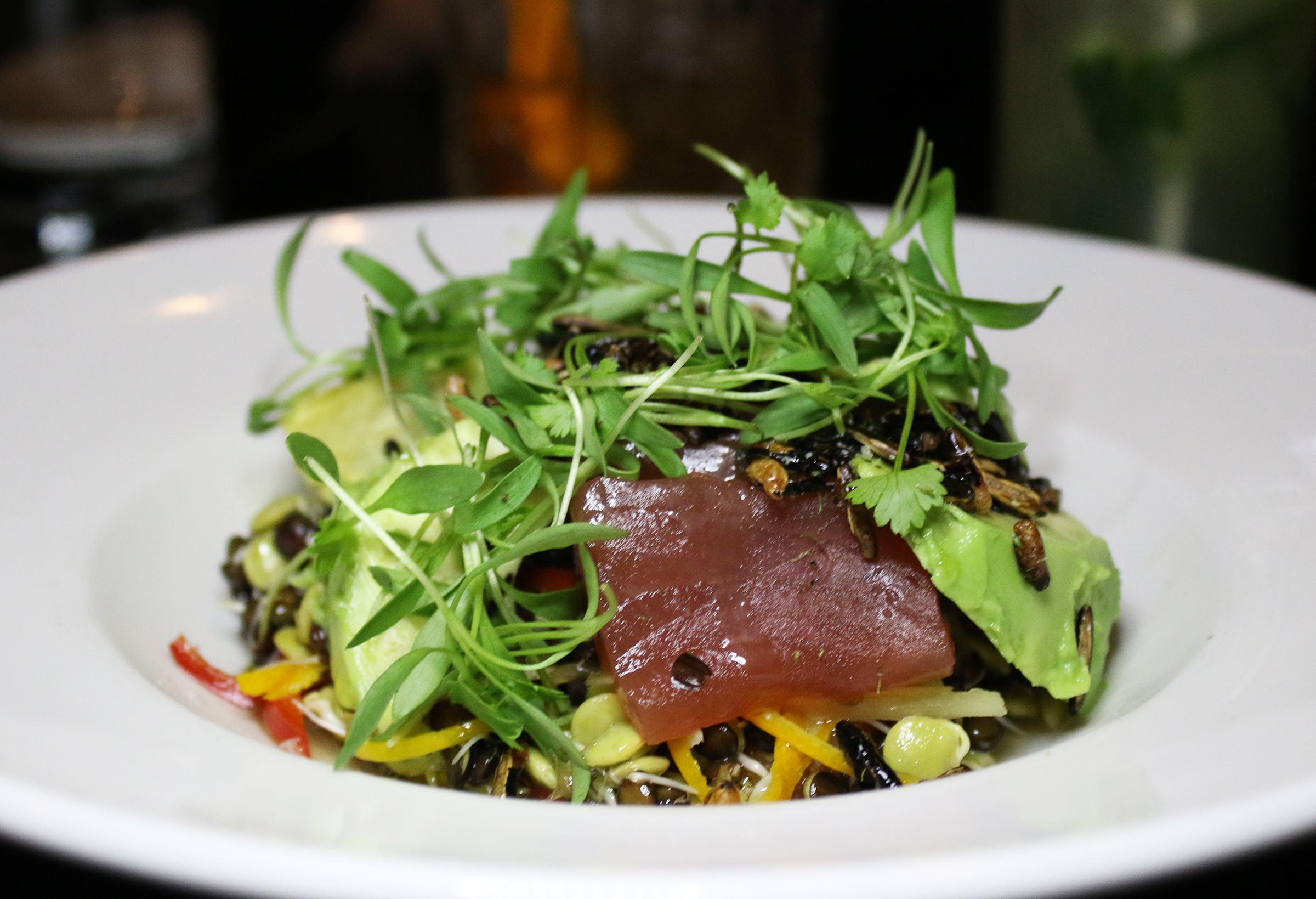 Tuna Crudo: Cara Cara Orange, Ginger, Sprouted Lentils, Avocado, Puffed Wild Rice