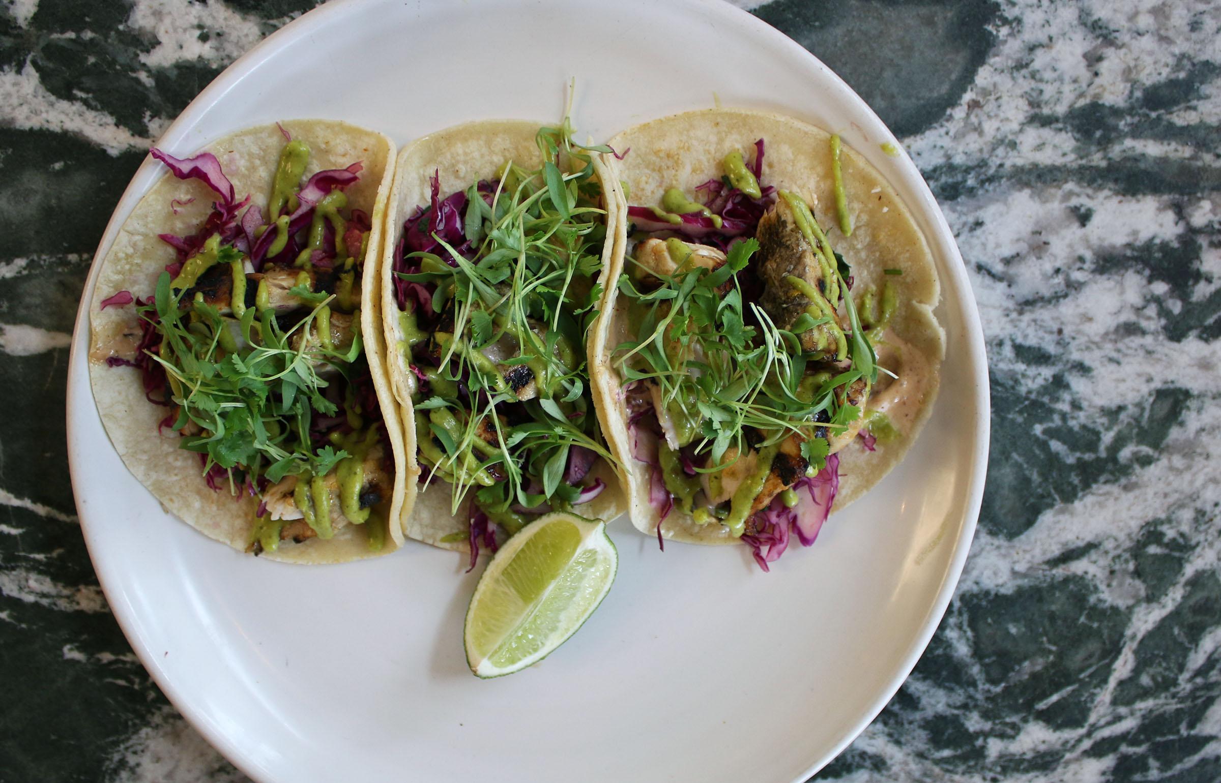 Fish tacos: Grilled fish, citrus slaw, chipotle aioli, mango herb sauce, corn tortillas (gf)