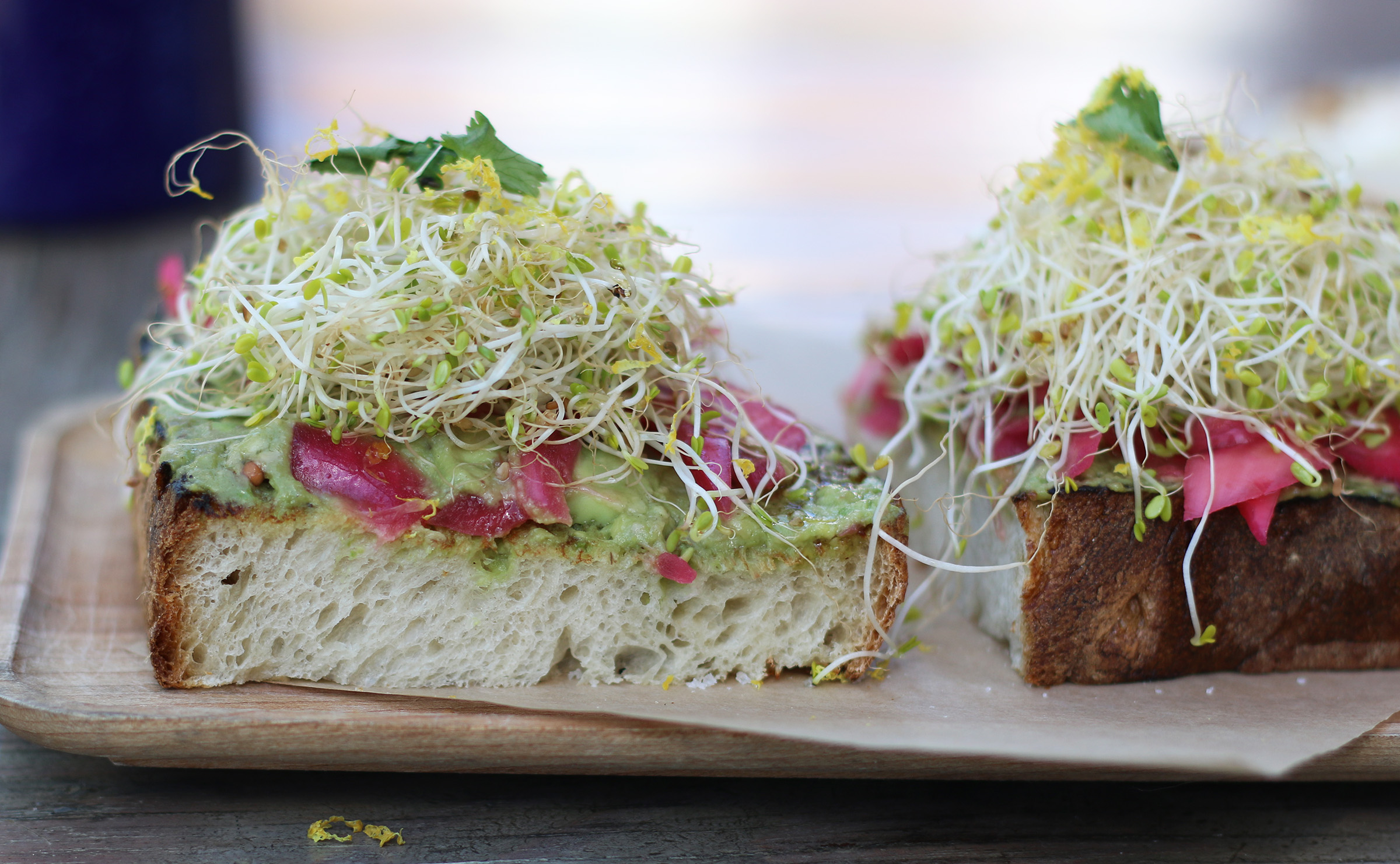 Another Avocado Toast: fresh alfalfa, tangy red onion, olive oil