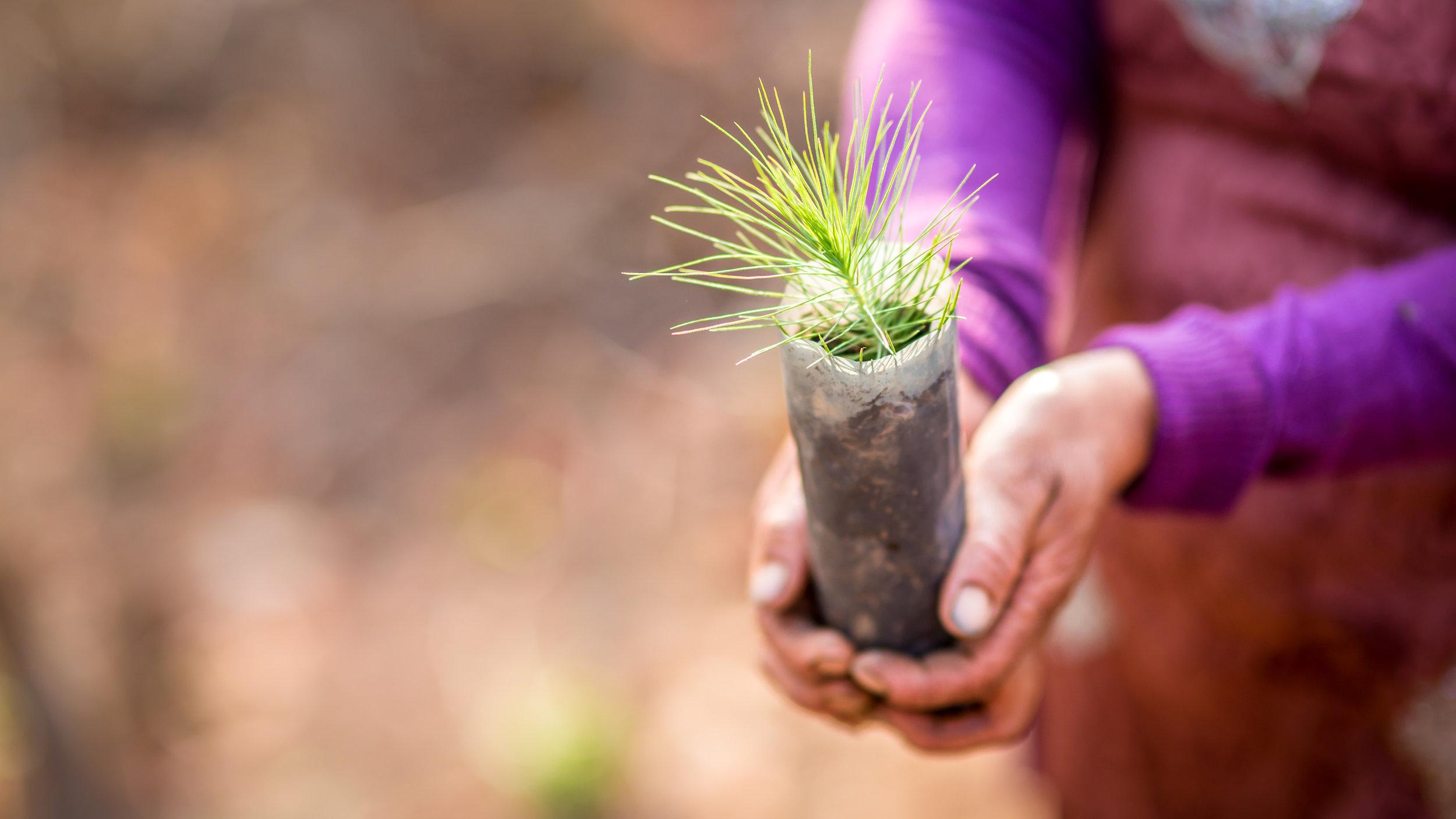 img-tentree-planting-10.jpg