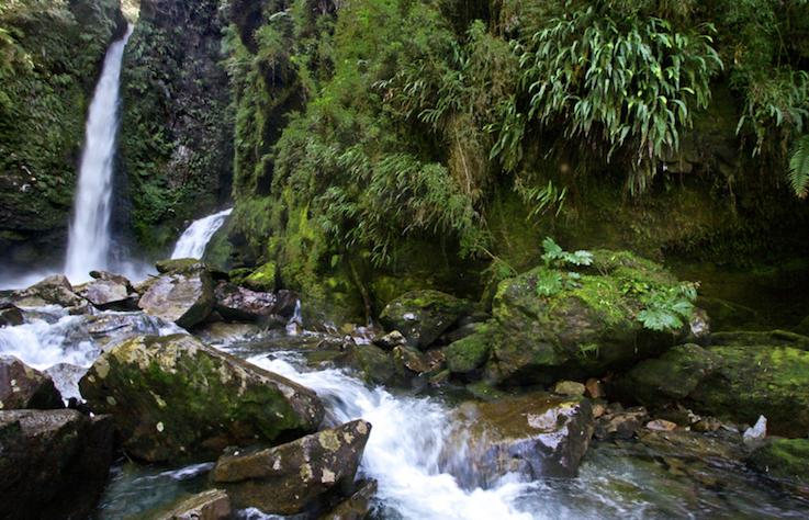 Pumalín Park