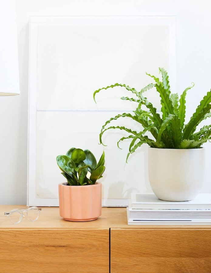 ordering-houseplants-online-the-sill