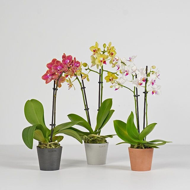 ordering-houseplants-online-the-bouqs-co