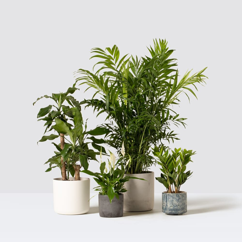 ordering-houseplants-online-patch