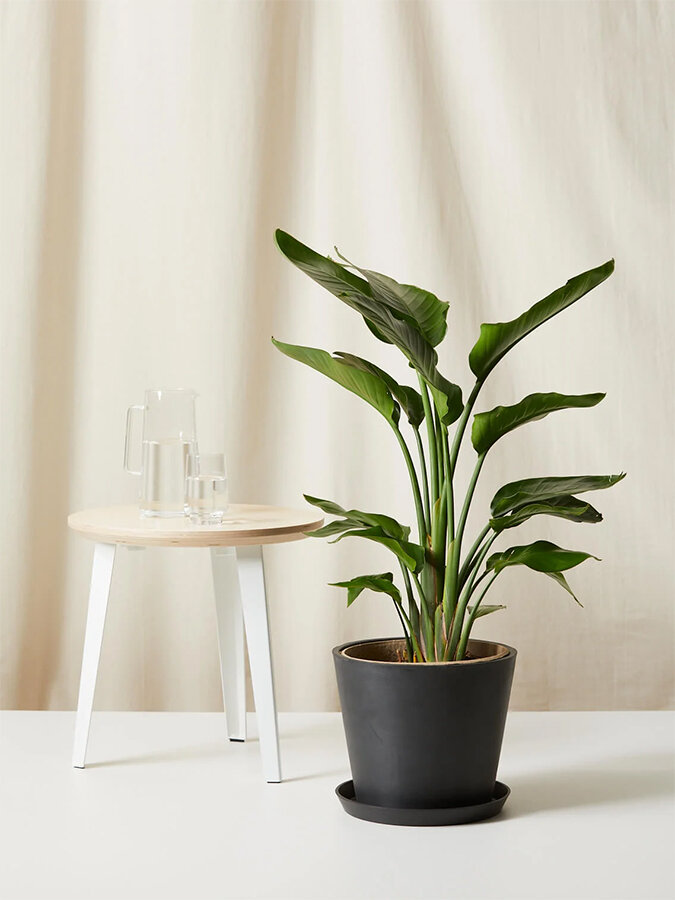 ordering-houseplants-online-bloomscape