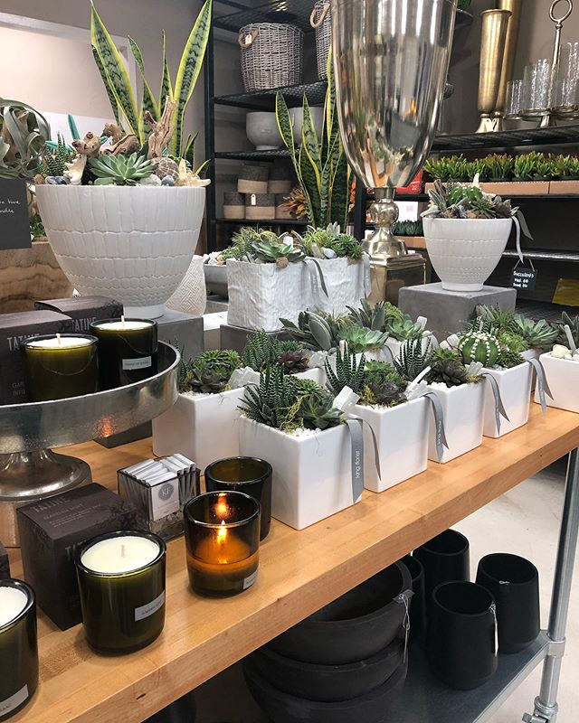 Are you a fan of chic modern succulents? Our modern collection has something for every space, from your office to your bedroom. Take a look at the collection online or give us a call to order yours today!