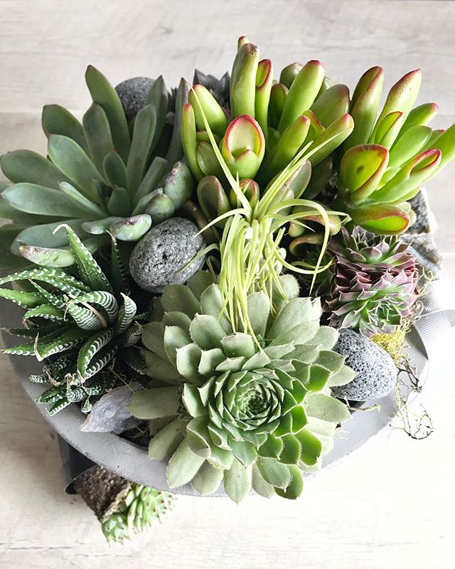Happy Monday everyone! We're enjoying this stunning fall weather, and so are our plants 🍂 The Deluxe Tranquil Garden is one of our favorites! This design features lava rocks, moss, and crystals in a beautiful concrete vessel