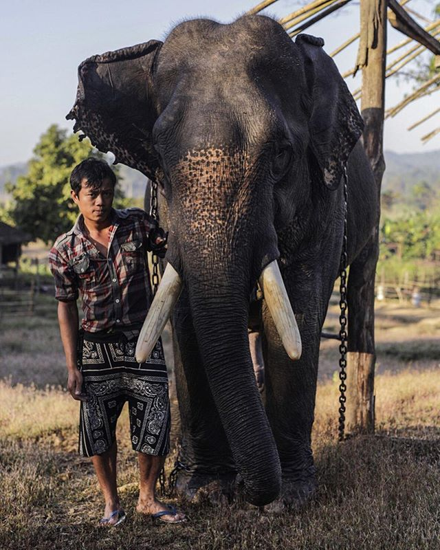 An elephant and his Mahout pose for a portrait at a timber camp in Myanmar.